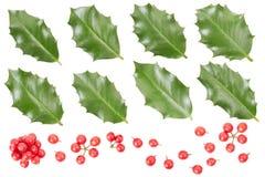 Raccolta delle foglie e delle bacche dell'agrifoglio Immagine Stock