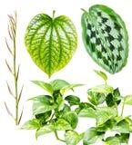 Raccolta delle foglie isolate su fondo bianco fotografia stock