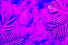 Raccolta delle foglie tropicali, pianta del fogliame sul fondo variopinto della pittura di pendenza Progettazione astratta della  fotografia stock