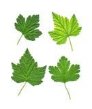 Raccolta delle foglie verdi differenti Fotografie Stock Libere da Diritti