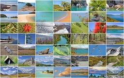Raccolta delle immagini della Nuova Zelanda Fotografia Stock Libera da Diritti