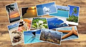 Raccolta delle immagini tropicali Fotografia Stock Libera da Diritti