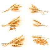 Raccolta delle orecchie e del seme del grano delle foto Fotografie Stock Libere da Diritti