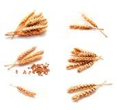 Raccolta delle orecchie e del seme del grano delle foto isolati Fotografia Stock