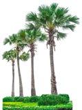 Raccolta delle palme isolate su fondo bianco Fotografia Stock