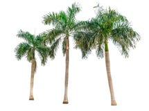 Raccolta delle palme isolate su fondo bianco Fotografia Stock Libera da Diritti