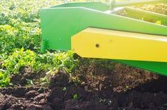 Raccolta delle patate sul campo Il meccanismo della patata che raccoglie nel lavoro aratro del trattore per scavare le patate ara Fotografie Stock