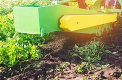 Raccolta delle patate sul campo Il meccanismo della patata che raccoglie nel lavoro aratro del trattore per scavare le patate ara Immagini Stock