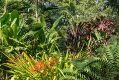 Raccolta delle piante che crescono nella foresta pluviale tropicale Fotografia Stock Libera da Diritti