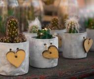 raccolta delle piante da appartamento con i succulenti e il cactu di legno del cuore Immagini Stock