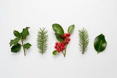 Raccolta delle piante decorative di Natale con le foglie verdi e Fotografia Stock