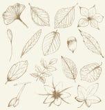 Raccolta delle piante disegnate a mano Fotografia Stock