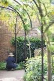 Raccolta delle piante rampicanti Fotografia Stock