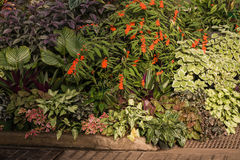 Raccolta delle piante tropicali Fotografia Stock Libera da Diritti