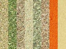 Raccolta delle spezie asciutte delle erbe Fotografie Stock Libere da Diritti