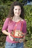 Raccolta delle uova immagini stock