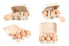 Raccolta delle uova in vassoio del cartone isolato su bianco Immagini Stock Libere da Diritti