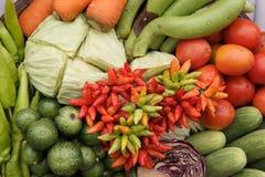 Raccolta delle verdure Fotografie Stock Libere da Diritti