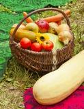 Raccolta delle verdure nel cestino Fotografia Stock Libera da Diritti