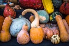 Raccolta delle zucche ad un mercato degli agricoltori immagini stock libere da diritti