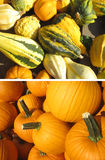 Raccolta delle zucche sul mercato di autunno Immagine Stock