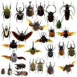 Raccolta dello scarabeo dei gioielli isolata Fotografie Stock