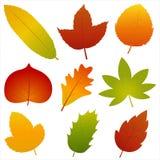 Raccolta di Autumn Leaves Vector Fotografie Stock