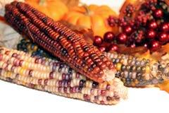 Raccolta di autunno fotografie stock libere da diritti