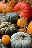 Raccolta di autunno fotografia stock libera da diritti
