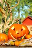 Raccolta di autunno Immagine Stock Libera da Diritti