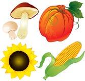 Raccolta di autunno Immagini Stock