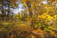Raccolta di bello Autumn Leaves variopinto/di verde, giallo, Immagini Stock