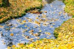 Raccolta di bello verde variopinto di Autumn Leaves, giallo, arancia, rossa Immagini Stock