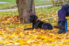 Raccolta di bello verde variopinto di Autumn Leaves, giallo, arancia, rossa Fotografia Stock Libera da Diritti