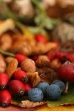 Raccolta di caduta delle bacche di autunno Fotografia Stock