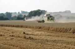 Raccolta di cereale Fotografia Stock Libera da Diritti