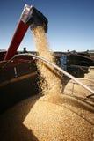 Raccolta di cereale Immagini Stock Libere da Diritti