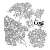 Raccolta di corallo grafica Immagini Stock