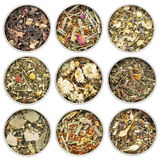 Raccolta di erbe del tè di miscela Fotografie Stock