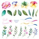 Raccolta di Foral con i fiori, la peonia, le foglie, i rami, la pianta succulente, i fiori della pansé, i nastri e più Immagini Stock