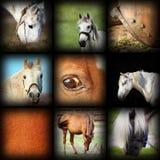 Raccolta di immagine dei dettagli dei cavalli Immagine Stock