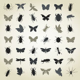 Raccolta di insects4 Immagine Stock Libera da Diritti