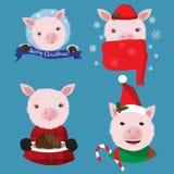 Raccolta di Natale con quattro maiali divertenti sui precedenti blu immagini stock