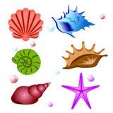 Raccolta di simboli delle conchiglie Insieme di vettore illustrazione vettoriale