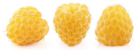 Raccolta di singoli frutti gialli del lampone isolata su bianco Fotografie Stock Libere da Diritti