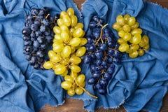 Raccolta di un mazzo di uva Fotografie Stock Libere da Diritti