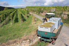 Raccolta di uva del rimorchio e del trattore Fotografie Stock