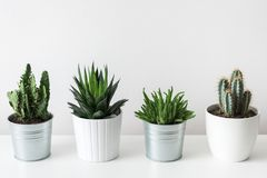 Raccolta di vari cactus e crassulacee in vasi differenti Piante conservate in vaso della casa del cactus sullo scaffale bianco Fotografia Stock