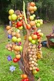 Raccolta di verdure Fotografie Stock