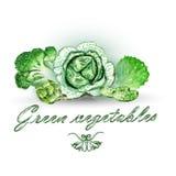 Raccolta di verdure sana verde dell'acquerello Fotografie Stock